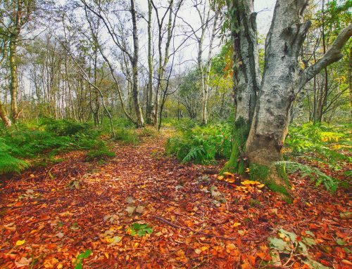 Healing woods and spaces to play an important role in Suffolk's mental health
