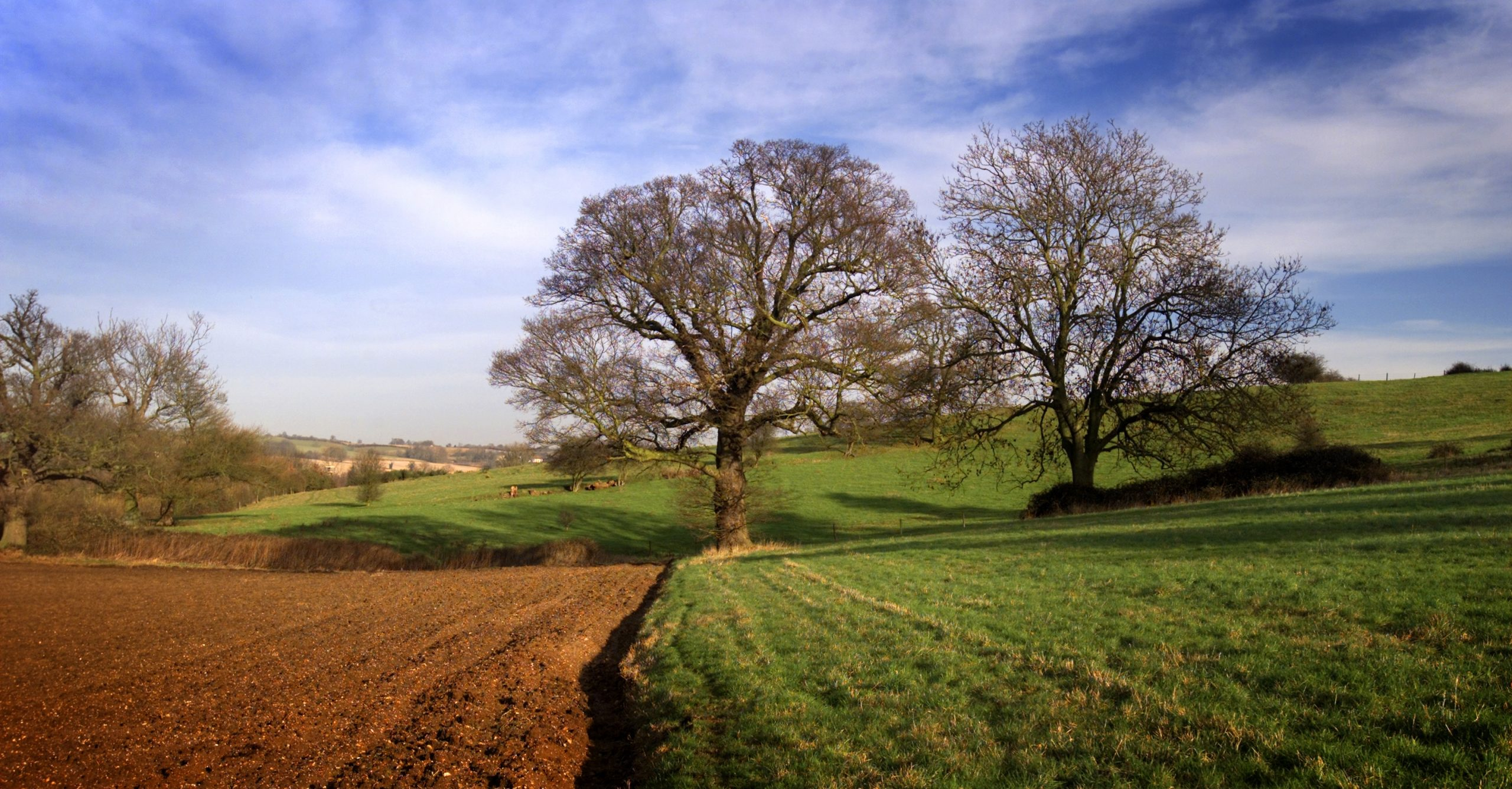 Stour Valley In Spring.jpg