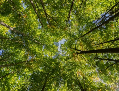 100,000 trees planted as part of ambitious council scheme