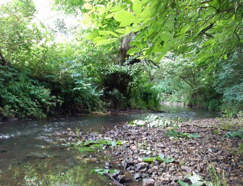 Green oasis set to strengthen Mid Suffolk's biodiversity