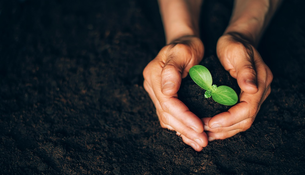 A pair of hands protecting a small plant in the soil